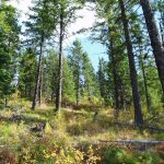 Montana Forests